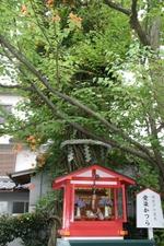 Katsuranoki_3